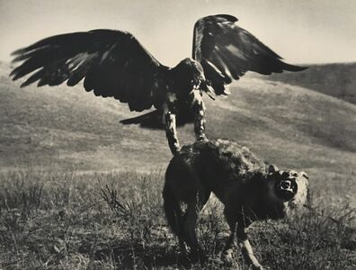 Max Alpert, 'Hunting with Golden Eagle, Kazakhstan, 1930's', Printed before 1960's