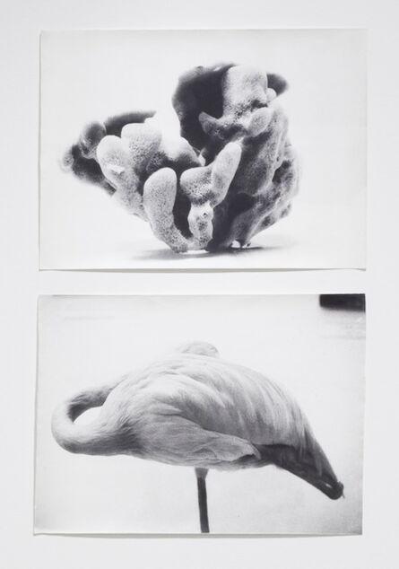 Jochen Lempert, 'From Symmetry and Architecture (Sponge-Flamingo)', 1997-2005