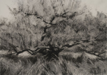 Connie Hayes, 'Orchard #10'