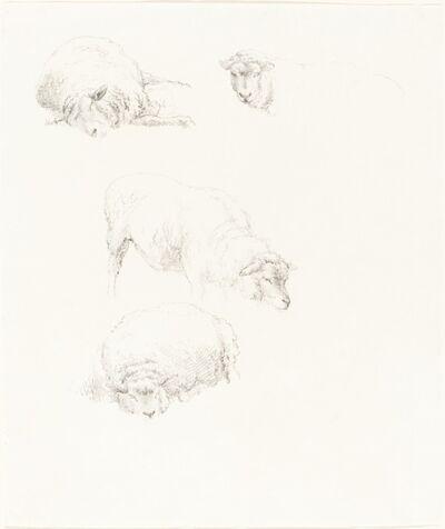 Robert Hills, 'Studies of Sheep'