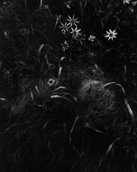 Carola Vogt und Peter Boerboom, 'Gartenstück Nr. 5, Freising', 2017