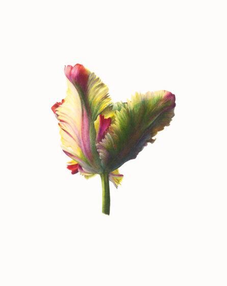 Fiona Strickland, 'TULIPA 'FLAMING PARROT'', ca. 2020