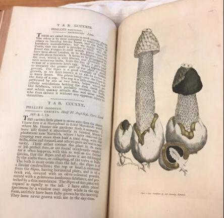 James Sowerby, 'Phallus impudicusplate from Coloured Figures of English Fungi or Mushrooms, Volume 3', 1787