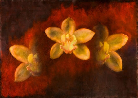 Maggie Hasbrouck, 'Star (Yellow Orchids)', 2011