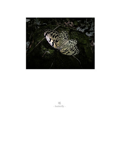 Osamu James Nakagawa, 'butterfly', 2001-2009
