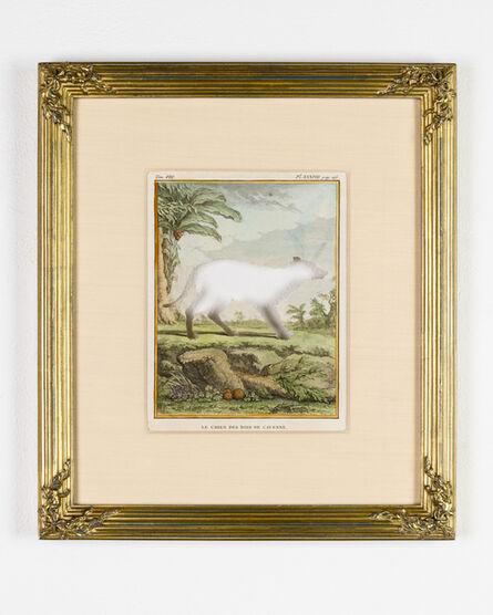 Brandon Ballengée, 'RIP Arawak Forest Dog: After Jacques de Séve', 1771/2015