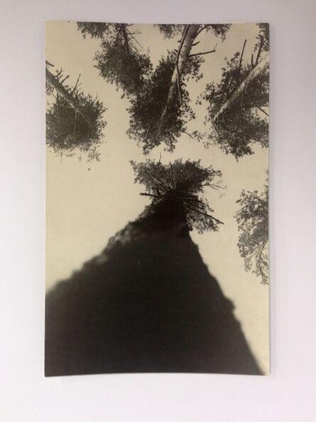 Alexander Rodchenko, 'Pine trees', 1927