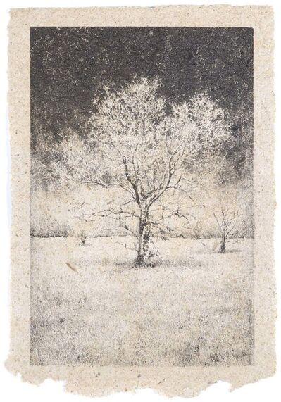 Matthew Brandt, 'Tree 42', 2009-2011