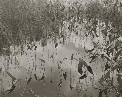 """Koichiro Kurita, '""""Share II"""" Montville, ME', 2011"""