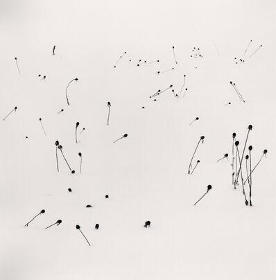 Michael Kenna, 'Flowers in Winter, Sanai, Hokkaido, Japan', 2004