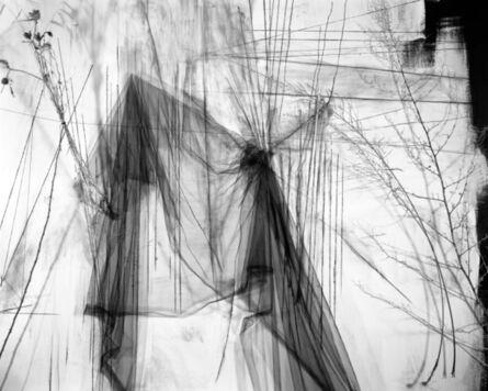 Lauren Semivan, 'May', 2011