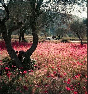 Jacques Henri Lartigue, 'Florette in the Morgan, Provence, France, May 1954', 1954