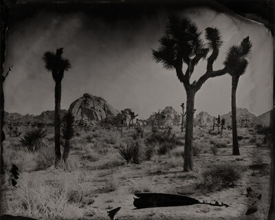 Eric Overton, 'Joshua Tree with Rock Formations', 2016