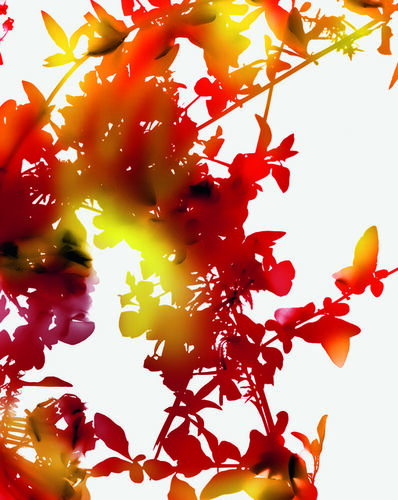 James Welling, '021R', 2011