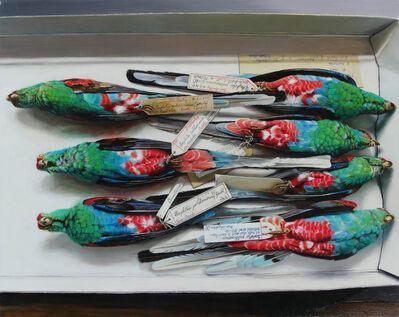 Isabella Kirkland, 'Paradise Parrots (extinct)', 2015