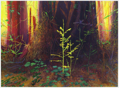 Michael Krueger, 'New Growth in an Old Forest', 2021