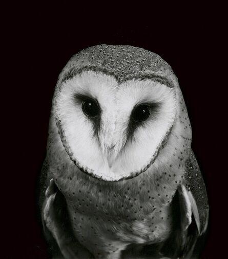 Walter Schels, 'Owl', 2000