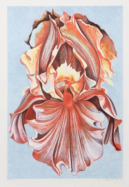 Lowell Nesbitt, 'Pink Iris', ca. 1980