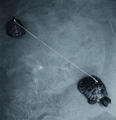 Graziano Folata, 'Slow Distance', 2013