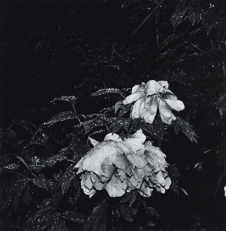 Issei Suda, 'Yugano, Shizuoka, 1981 (flower)'