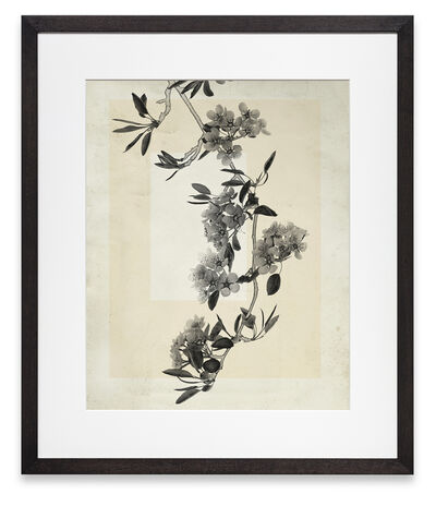 Thomas Ruff, 'flower.s.19', 2018