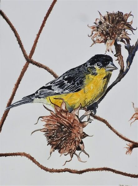 Carol Dawson, 'Thistle-Swinging: Lesser Goldfinch', 2020