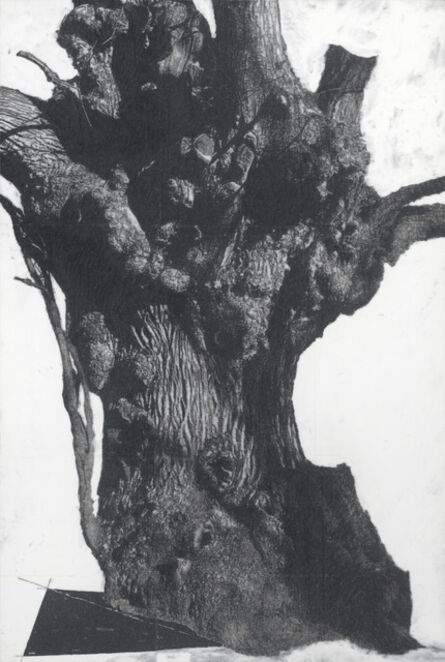 """Patrick Van Caeckenbergh, '""""Drawing of old trees on wintry days during 2007-2014""""', 2007-2014"""