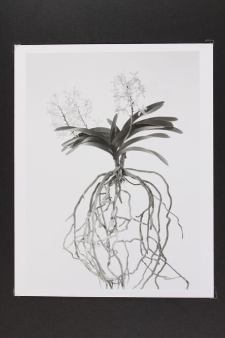 Phil-Hee Kong, 'Orchid', 2013