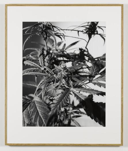 Joachim Koester, 'From the Secret Garden of Sleep 06', 2008