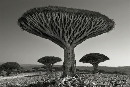 Beth Moon, 'Shebehon Forest', 2010/2012