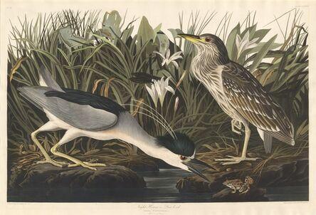 Robert Havell after John James Audubon, 'Night Heron or Qua bird', 1835