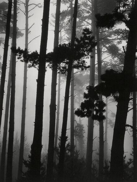 Brett Weston, 'Pines in Fog', 1962