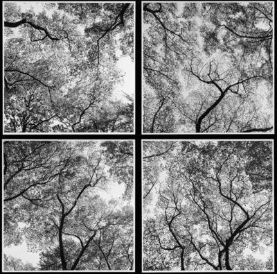 Harry Callahan, 'Trees (Ansley Park Quad)', 1991