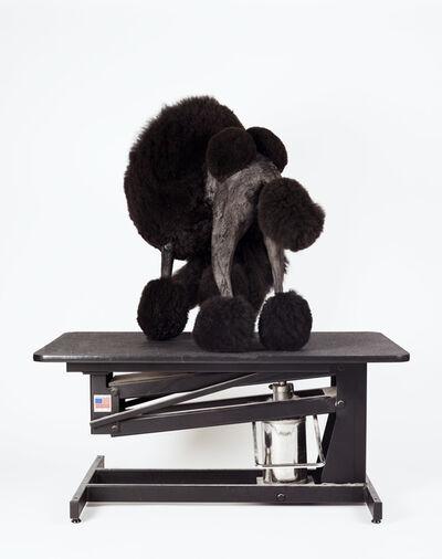 Geissler/Sann, 'Volatile Smile: The Poodle's Core 1', 2015