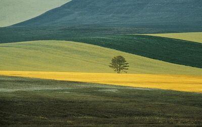 Franco Fontana, 'Basilicata', 1986