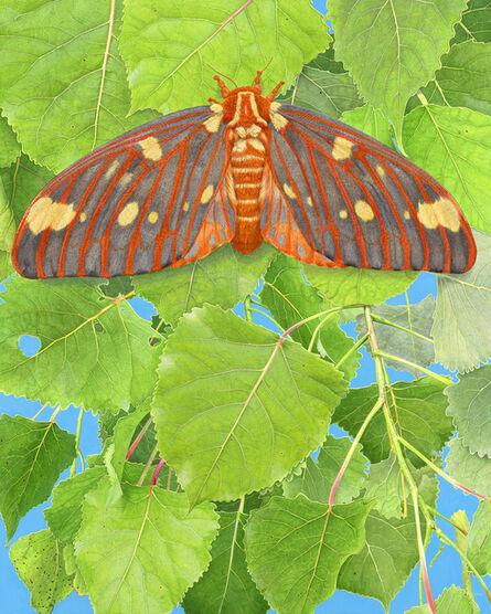 Rick Pas, 'Regal Moth & Aspen', 2017