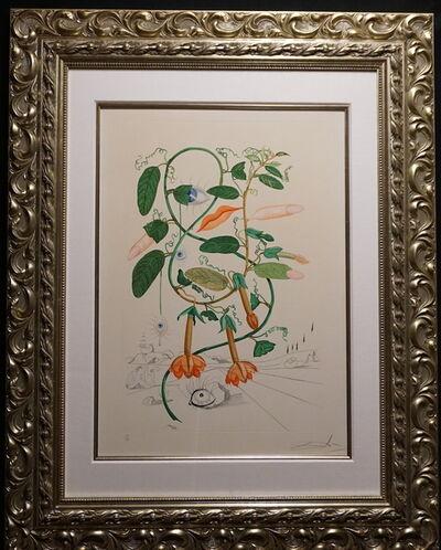 Salvador Dalí, 'Flora Dalinae Pisum Sensuale', 1968
