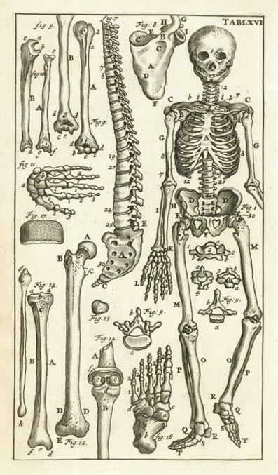 Steven Blankaart, 'Tab. LXVI', 1695