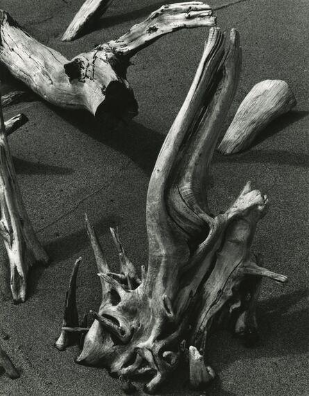 Brett Weston, 'Driftwood Hawaii', 1978