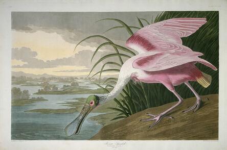 Robert Havell after John James Audubon, 'Roseate Spoonbill', 1836