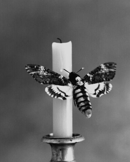 Tereza Zelenkova, 'The Language of Moths', 2020