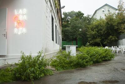 UrbanFaunaLab, 'Nettle', 2013