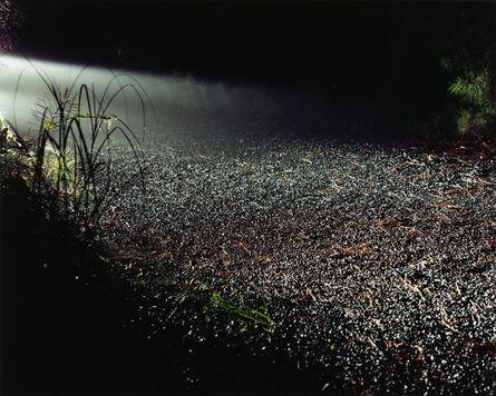 Maria Passarotti, 'Driveway', 2005