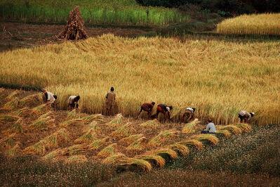 Steve McCurry, 'Kathmandu Valley Harvest', 1979