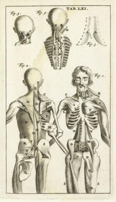 Steven Blankaart, 'Tab. LXI', 1695