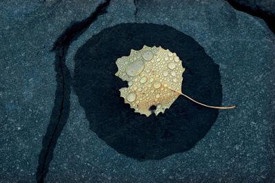 Ernst Haas, 'Wet Leaf Vermont', 1969
