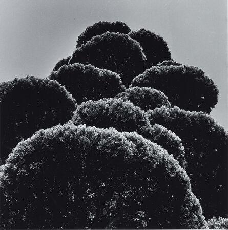 Issei Suda, 'Iga Mie, 1979'