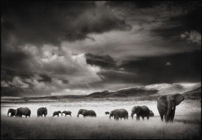Nick Brandt, 'Elephant Herd, Serengeti', 2001