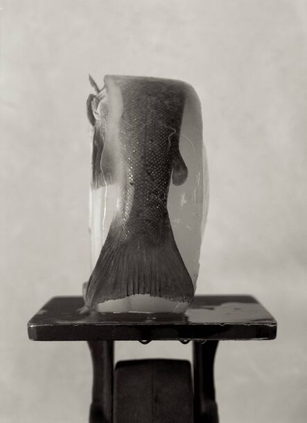 Zoë Zimmerman, 'Pedestal', 2005