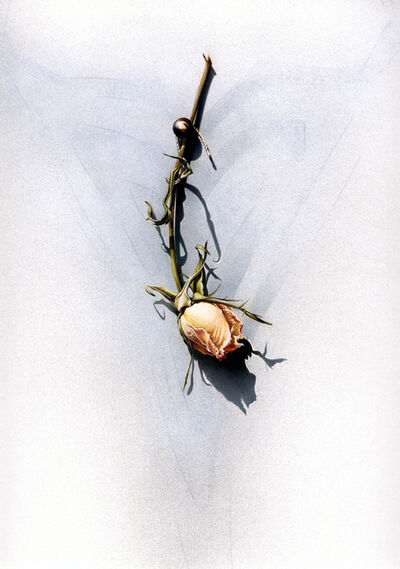 Laura Fantini, 'Wedding Rose', 2019